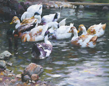 Koester Alexander Ducks On A Pond Canvas 16 x 20   #5383