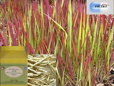 Imperata Rhizome /Woolly Grass / Bai Mao Gen /concentrated extract 1:7