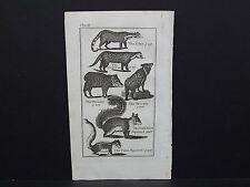 Buffon's Natural History, 1792, Animals, #16 Zibet, Civet Cat, Peccary, Squirrel