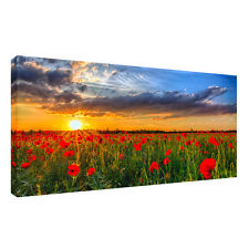 Large sunset red flower .grass sky, landscape 20x40 inch Canvas Wall  Picture
