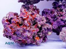 ''AQM'' Maricultured Live Rock 10 LBS , Live Coral , Marine , Fish