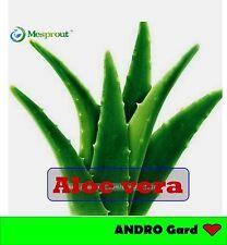 ALOE VERA - Medicinal Aloe Vera (100 seeds)