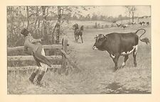 Hunter, Red Coat, Confronts Bull, A.B. Frost, Vintage, 1904 Antique Art Print,