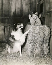 JON PROVOST UNSIGNED PHOTO - 5791 - LASSIE