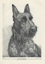 SCOTTISH TERRIER LOVELY HEAD STUDY BY NINA SCOTT LANGLEY ORIGINAL 1934 DOG PRINT