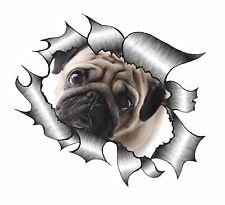 RIPPED TORN METAL LOOK design con simpatici PET PUG DOG OCCHI TRISTI AUTO ADESIVO VINILE