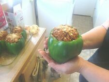 HUGE BIG GIANT ENORMOUS  GREEN  BELL PEPPER   25 +  SEEDS  PREPPER