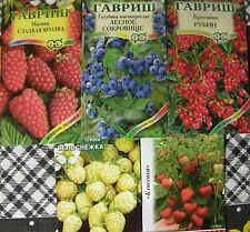RUSSIAN BERRIES seeds: red whortleberry-blueberry-raspberry-wild strawberry
