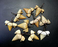 """1 """" Lamna Shark Tooth with Antique Wire Wrapped Fossil Teeth Morocco 10 pcs"""