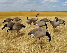 AVERY GREENHEAD GEAR GHG TIM NEWBOLD LESSER CANADA GOOSE DECOYS HP DOZEN NEW!