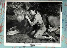PAMELA TIFFIN  -   photo US originale   THE LION