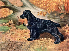 COCKER SPANIEL CHARMING DOG GREETINGS NOTE CARD LOVELY BLACK DOG AND BIRD