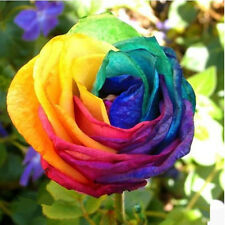 100pcs Colorful Rainbow Rose Seeds Fit Planting At Home/Garden Pretty Rose Decor
