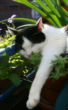 75+ Organic Catnip Seeds ~Aromatic Herb & Flower ~Cats Love this! ~Easy Garden