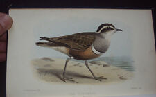 THE BIRDS OF CUMBERLAND: Notes on Birds of Westmorland / Map / 1st 1886.