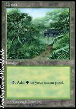 Forest Version 3 // NM // APAC Lands // engl. // Magic the Gathering
