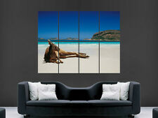 KANGAROO ON BEACH AUSTRALIA  SEA ART LARGE  GIANT POSTER PRINT