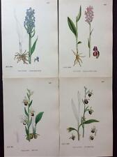 Botanical, SPIDER ORCHIS & VARIOUS c1860 by Sowerby Original Prints, Hcol