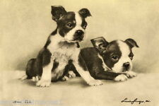 1915 Drawing~Two Boston Terrier  Puppy Puppies~Dog Dogs~ NEW Large Note Cards