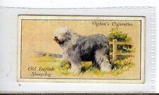 (Jc3749-100)  OGDENS,DOGS,OLD ENGLISH SHEEPDOG,1936,#29