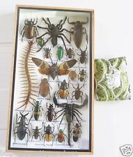 Real Mounted Insect Box Rare Insects Display Taxidermy Beetle Cicada Scorpio