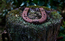 Framed Print - Rusty Old Horseshoe Nailed to a Tree Stump (Picture Horse Art)