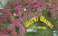 AG(P) Weekie Wachee, FL: The Bougainvillea are in Bloom 12 Months of the Year
