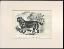 SUSSEX SPANIEL RARE ANTIQUE 1878 NAMED DOG PRINT ENGRAVING READY MOUNTED