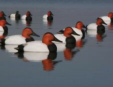 -3- Avery Greenhead Gear GHG Over-Size Canvasback Diver Decoys 3 Drakes