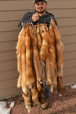 Tanned Red Fox pelt, fur soft tan, great value, TNRF-LG/MG