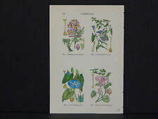 Botanicals, Miniatures, Hand Colored c.1910 #07