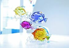 Swarovski Crystal Rainbow Fish Family Colorful Sea 5223195 Brand New in Box