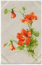 ILLUSTRATEUR. STYLE C. KLEIN. BERTHA MAGUIRE.  FLEURS.  FLOWERS.