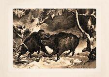 Deiker Kämpfende Keiler aus Jagdalbum von 1865 Faksimile 261 auf Büttenpapier