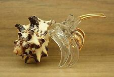 HERMIT-CRAB Natural Shell Ornament Curio Display Animal Sea Marine Ocean Gift