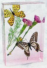 Butterfly in Resin Paperweight or Window Decoration
