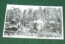 NOSTALGIA INK POSTCARD HOP FARM MEASURING HOPS (1935).