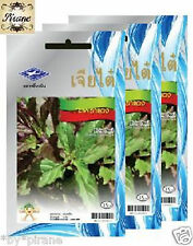 3 of THAI RED HOLY BASIL SEEDS CHIA TAI OUTDOOR PLANTING HERB for Pad Kapao