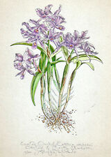 EASTER ORCHID original hand worked, signed, limited edition BOTANICAL art print