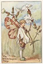Flower Fairies THE WHITE CAMPION FAIRY Vintage Print c1930 by Cicely Mary Barker
