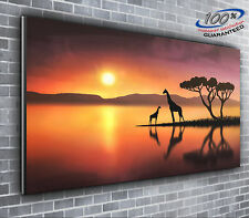 Giraffes in the Sunset Panoramic Canvas Print XXL 4 foot wide x 1.5 foot high