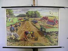 schönes altes Schulwandbild Kartoffelernte Bauer Geschenk Jubiläum 90x64 vintage