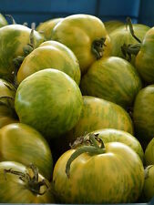 "50 GREEN ZEBRA TOMATO Striped 2"" Lycopersicon Fruit Vegetable Seeds *Combind S/H"
