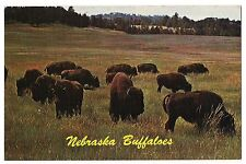 NEBRASKA BUFFALOES Herd of Bison Plains, Western NE Postcard Vintage Buffalo