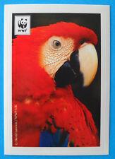 FIGURINA COOP WWF IL GIRO DEL MONDO - N.129 - ARA SCARLATTA