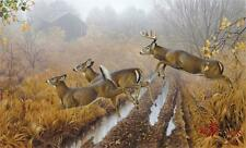 Morning Run By Jerry Gadamus  Print Signed and Numbered  Deer Print 24.5 x 14.5