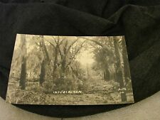REAL PHOTO POST CARD INTERLACHEN DOWN TREE LIMBS WRITING ON THE BACK NO STAMP @@