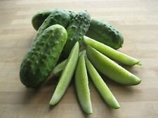 35 NATIONAL PICKLING CUCUMBER SEEDS 2017 ( $2.50 max shipping! )
