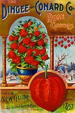 1897 Chinese Lantern Vintage Flowers Seed Packet Catalogue Advertisement Poster