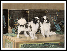 JAPANESE CHIN TWO DOGS LOVELY VINTAGE STYLE DOG PRINT POSTER